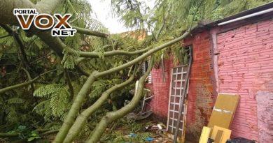Estragos > Temporal derruba árvores, destelha casas e danifica decoração de Natal em Jacarezinho