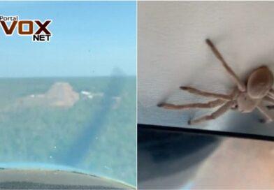 Inusitado – Avião faz pouso forçado após encontrarem aranha gigante em cabine