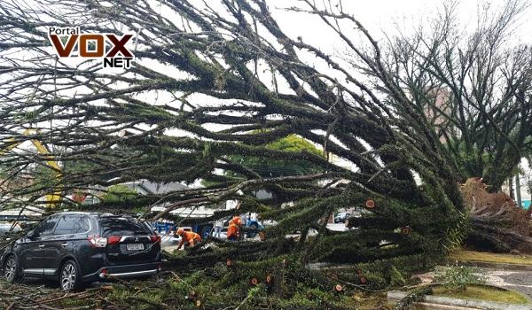 Susto – Temporal derruba árvores, destelha casas e deixa imóveis sem luz no norte do Paraná